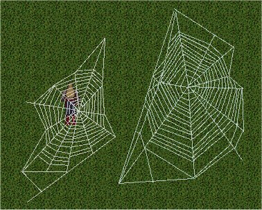 Spiderwebs.jpg