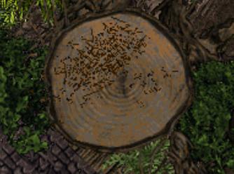 Tree floor.jpg