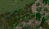 forest2mountain.JPG
